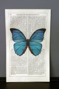 Antique book paper prints - blue butterfly £12.00 - Rockett St George